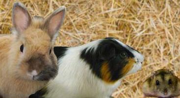 Adopte un rongeur Association de Protection Animale située à Morangis (dans le 91).