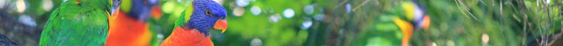 Contacte l'association Gamelles Sans Frontière