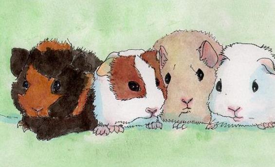 Mimi Rongeurs Association de Protection Animale située à Paris
