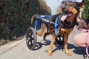 Association à l'honneur : Suzi Handicap Animal