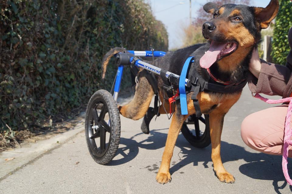 Association pour animaux handicapés