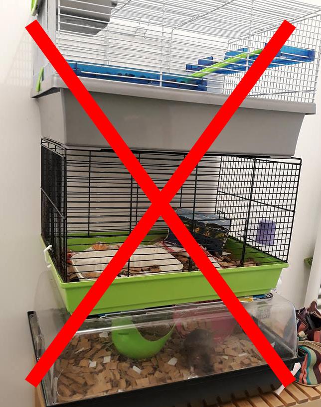 cage non adaptée pour rats