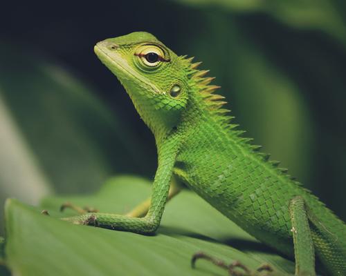 Reptile à l'adoption cergy en association