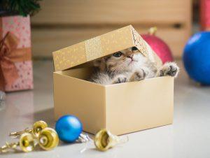 Offrir un animal en cadeau ?