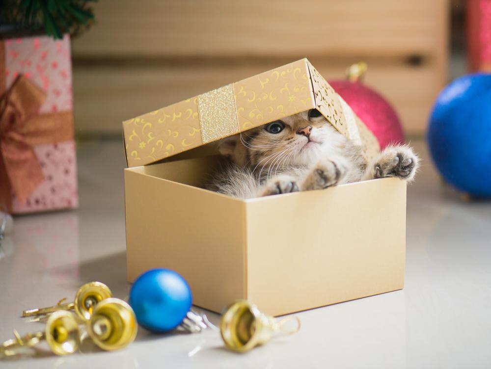 Animal en cadeau