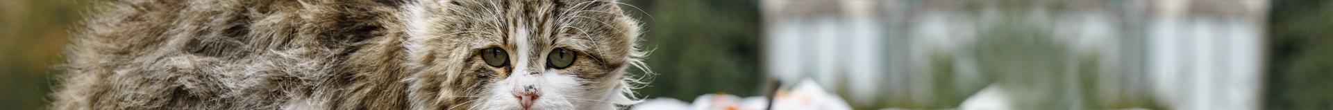 Association de protection animale en ile de France depuis 10 ans
