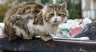 Aider les animaux de la rue, les nourrir et les soigner