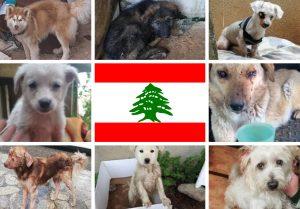 Gamelles Sans Frontière au Liban